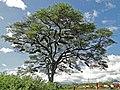 Beehives in a tree.jpg