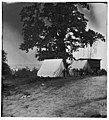 Belle Plain Landing, Virginia. View of the tents of the Sanitary Commission LOC cwpb.01798.jpg