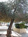 Ben Gurion Ave IMG 8019.JPG