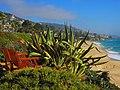 Bench on Laguna Beach California ^^Un banc a Montage Resort Laguna Beach - panoramio.jpg