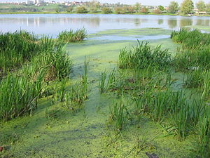 Zolota Lypa River - Damb across Zolota Lypa formed a large lake in the northern part of Berezhany, western Ukraine
