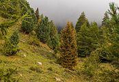 Bergtocht van Cogolo di Peio naar M.ga Levi in het Nationaal park Stelvio (Italië) 24.jpg