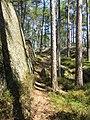 Bergvägg Tivedens nationalpark.jpg