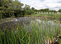 Betts Lane and Common Road junction pond at Nazeing, Essex, England 04.JPG