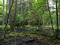 Białowieża National Park, Poland (4664472202).jpg