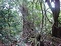 Bibosi - panoramio.jpg