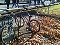 Bicycle and bicycle stand.jpg