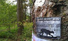 Dartmoor Big Cat