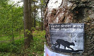 British big cats - A sign requesting information on big cats in West Sussex