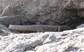 Big lizard in Afghanistan.jpg