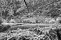 Biotopo Fontanazzo 6.jpg