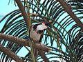 Bird pic.jpg