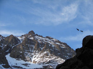 Toubkal - Image: Birds and toubkal