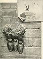 Birds of village and field- a bird book for beginners (1898) (14568666939).jpg