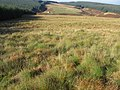 Black Hill to Eaglinside - geograph.org.uk - 593556.jpg