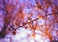 Blossom-sunset-budapest (Unsplash).jpg