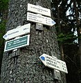 Blue trail from Lipno nV to Guglwald (2).jpg