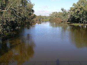 Bogan River - The Bogan River at Nyngan