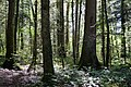 Bois des Glaisins (51195061767).jpg