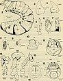 Boletin de la Sociedad de Biología de Concepción (1983) (20201427869).jpg