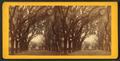 Bonaventure Cemetery, from Robert N. Dennis collection of stereoscopic views.png