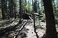 Bonsai Boulders Kananaskis Alberta Canada (26649240940).jpg