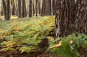 Temperate coniferous forest - Carpathian montane conifer forest, Slovakia.