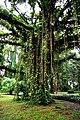 Botanic garden limbe.jpg