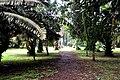 Botanic garden limbe132.jpg