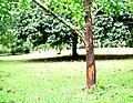 Botanic garden limbe58.jpg