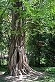 Botanical garden – spring 9144.jpg