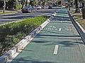 Bourke Street cycleway, Sydney.jpg