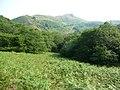 Bracken and woodland between Helmeth Hill and Caer Caradoc - geograph.org.uk - 1936524.jpg