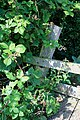 Brambles on a Stile - geograph.org.uk - 1434087.jpg