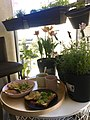 Breakfast hash browns and plants.jpg