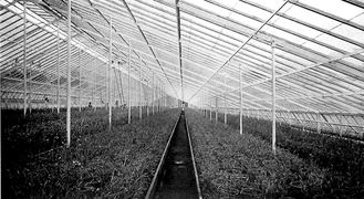 Center of a large greenhouse