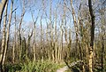 Bridleway, Babylon Down - geograph.org.uk - 2155876.jpg