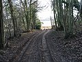 Bridleway exiting Pitt Wood to Cooting Down - geograph.org.uk - 1100336.jpg