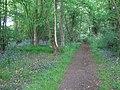 Bridleway in Rowhill Wood - geograph.org.uk - 1279402.jpg