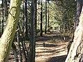 Bridleway on Elstead Common - geograph.org.uk - 691837.jpg