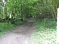 Bridleway running south from the South Downs Way - geograph.org.uk - 1424089.jpg