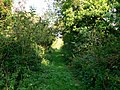 Bridleway to Monkton Down, near Winterbourne Monkton - geograph.org.uk - 970913.jpg
