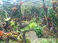 Bromeliad200.jpg