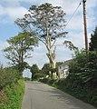 Bryn Gwyn Farmhouse, Llandegfan - geograph.org.uk - 956464.jpg