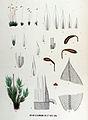 Bryum uliginosum — Flora Batava — Volume v17.jpg