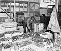 Buchenwald Property 80624.jpg