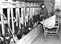 Bundesarchiv Bild 183-69362-0001, Kremmen, Bauer beim Füttern.jpg