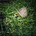 Butterfly's Secret.jpg
