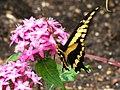 Butterfly (9112322290).jpg