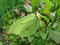 Butterfly in disguise (9579063188).jpg